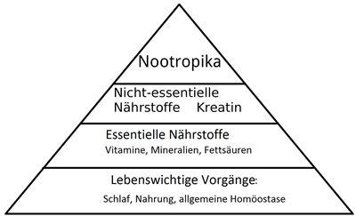nootropika pyramide