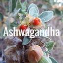 ashwagandha-128x128