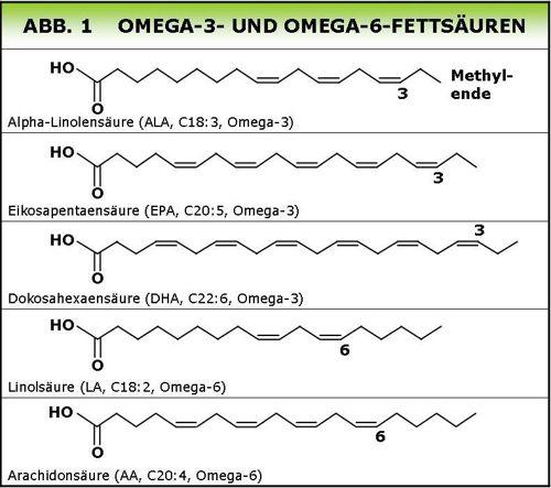 Omega fettsäuren struktur