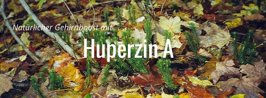 huperzin a header