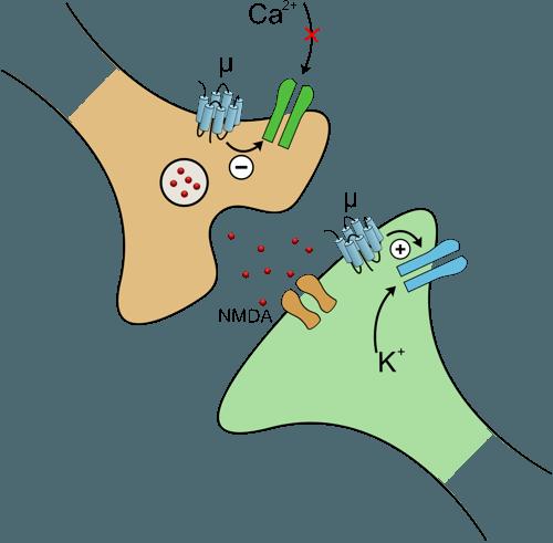 nmda-rezeptor